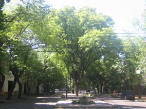Mendoza tree lined streets