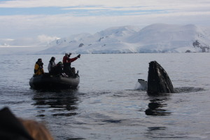 Antartica Day 5 _Whale Spyhopping