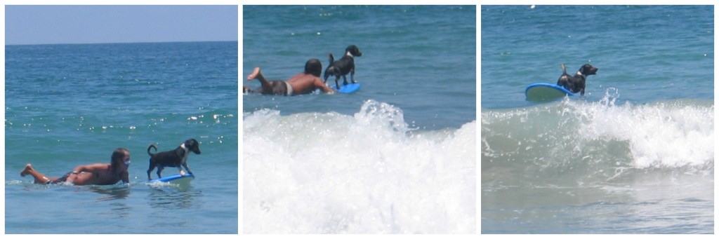 First the owner paddled his dog off and then launched him to surf - and he made it every time.  Great beach entertainment!