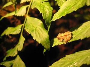 Teeny, tiny frog at night