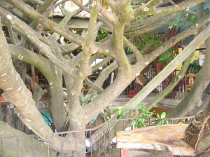 The upper level of the tree house hotel