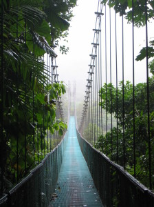 Loved all the clouds coming in over the bridge in the cloud forest