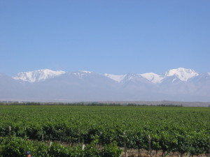 Mendoza Valley at the foot of the Andes Mountains