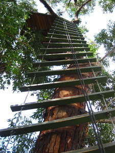 One of the tall ladders we had to climb up and when it was windy...it really moved!